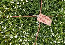 Jonathan's Mistletoe Diary