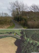 Streetview image of mistletoe at Bushey, Dorset