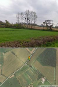 Tantalising mistletoe colony at Pulham - there on streetview but too dark to see yesterday evening...