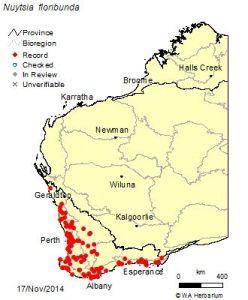 Distribution of Nuytsia floribunda