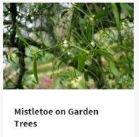 gardenmtoe